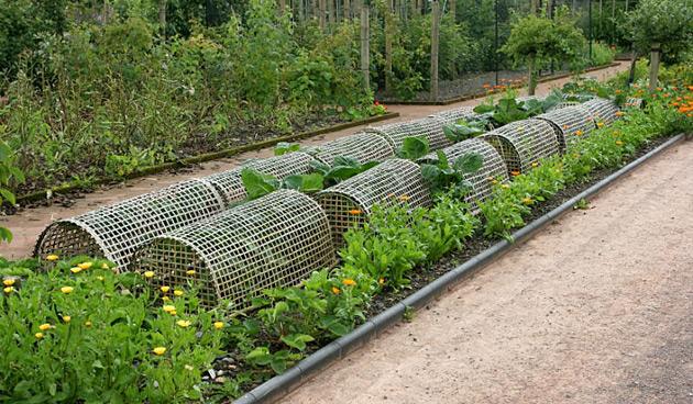 Bescherm Groenteplanten Tegen Schadelijke Insecten Landidee