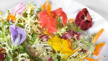 Gerechten met bloemen: mooi, lekker en gezond