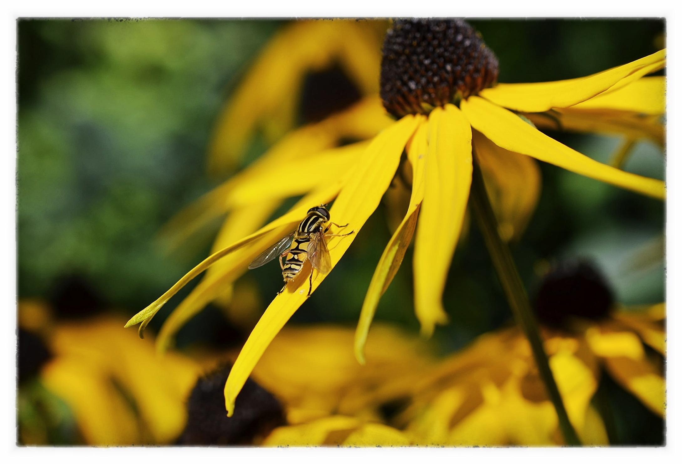 Geel in de tuin
