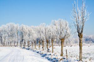 Wandeling sneeuw
