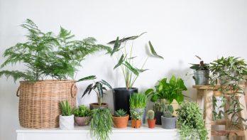 5 tips voor gezonde kamerplanten