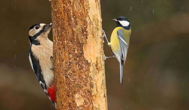 Vogels die thuisblijven