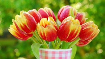 Langer plezier van je tulpen