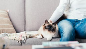 Kattenharen weghalen van meubels en kleding