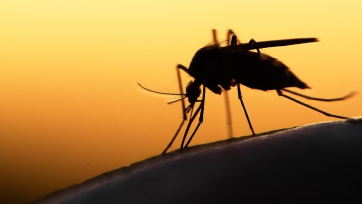 Muggen weren: 5 tips