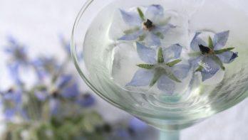 IJsblokjes met eetbare bloemen