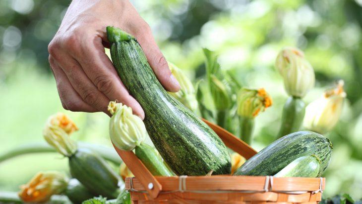 Smakelijke courgettes oogsten