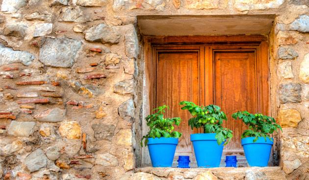 Tomatenplant verdrijft muggen