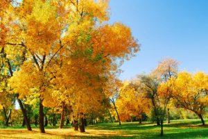 Betoverend herfstbos