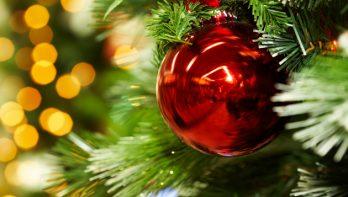 5 populaire soorten kerstbomen
