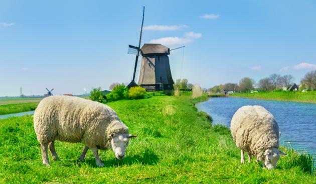 6 feitjes over het schaap