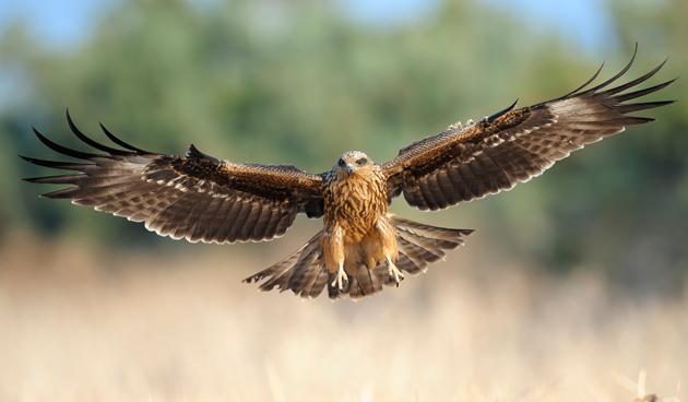 Verschillende roofvogels