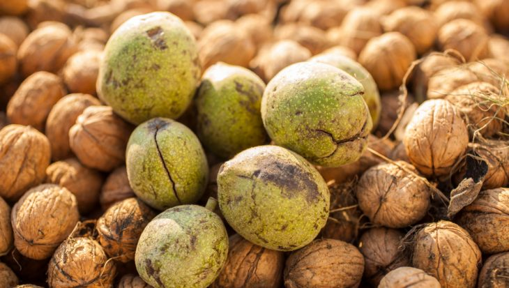 Natuurlijke kleur met walnoten