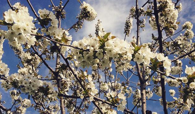 Aanbevolen fruitbomen