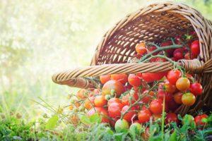 Tomaten-moestuinactie