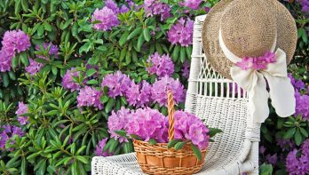 6 tuintips voor de lente