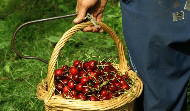 Kersvers zomerfruit in Rivierenland