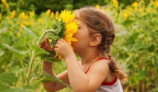 Gezonde zonnebloemen!