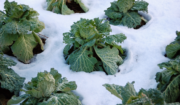 5 tips bij het oogsten in de winter
