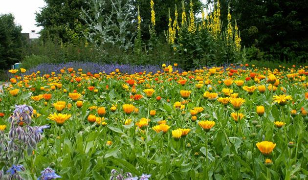 Botanische Tuin Alkmaar : Vanaf maart opening tuin hortus alkmaar landidee
