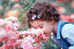 Geurende rozen tips