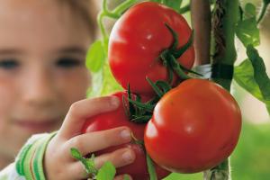 Het jaar van de tomaat