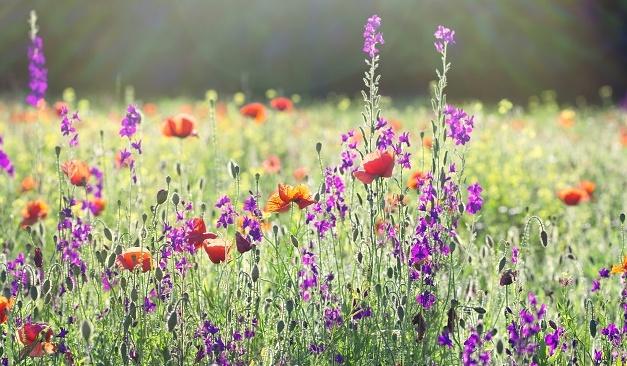 12 tips voor een betoverende bloemenweide