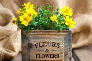 Tandzaad bloeiende planten