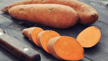 Zoete aardappel kweken