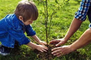 boom-planten-herfst