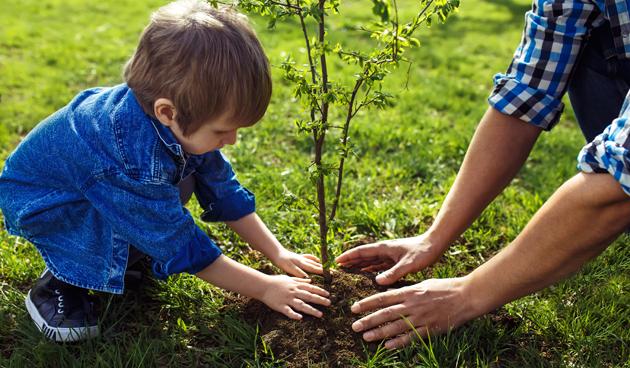 Planten En Bomen : Bomen en heesters planten in de herfst! landidee