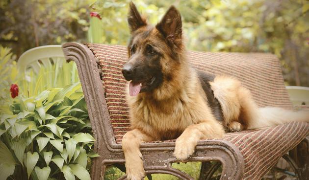 4 weetjes over de hond