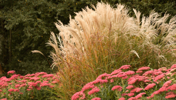 9x Bloeiende planten in de herfst