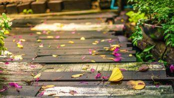Even op een rijtje: 5x bloemen die na de zomer nog steeds bloeien