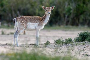 3x dieren in het wild gespot