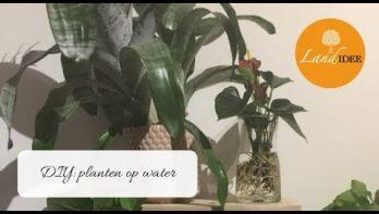 Hydroponie: planten op water zijn de nieuwste trend