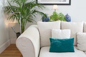 rouwvliegjes kamerplanten