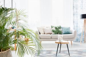 Mooie kamerplant: kentiapalm (Howea forsteriana)