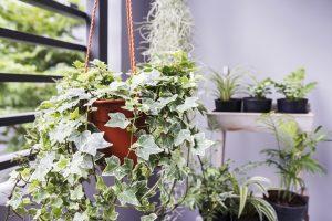 kamerplanten zijn goed voor energierekening