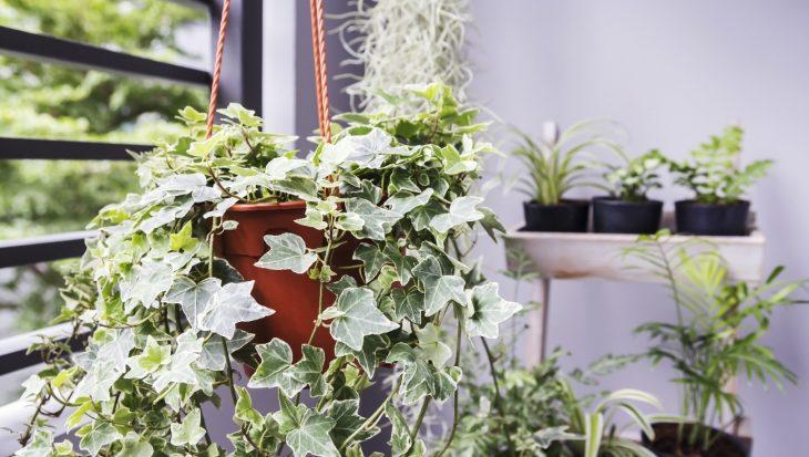 Verzorging van kamerplanten en invloed op de energierekening
