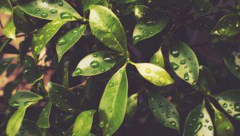 Planten beschermen tegen alle weersomstandigheden