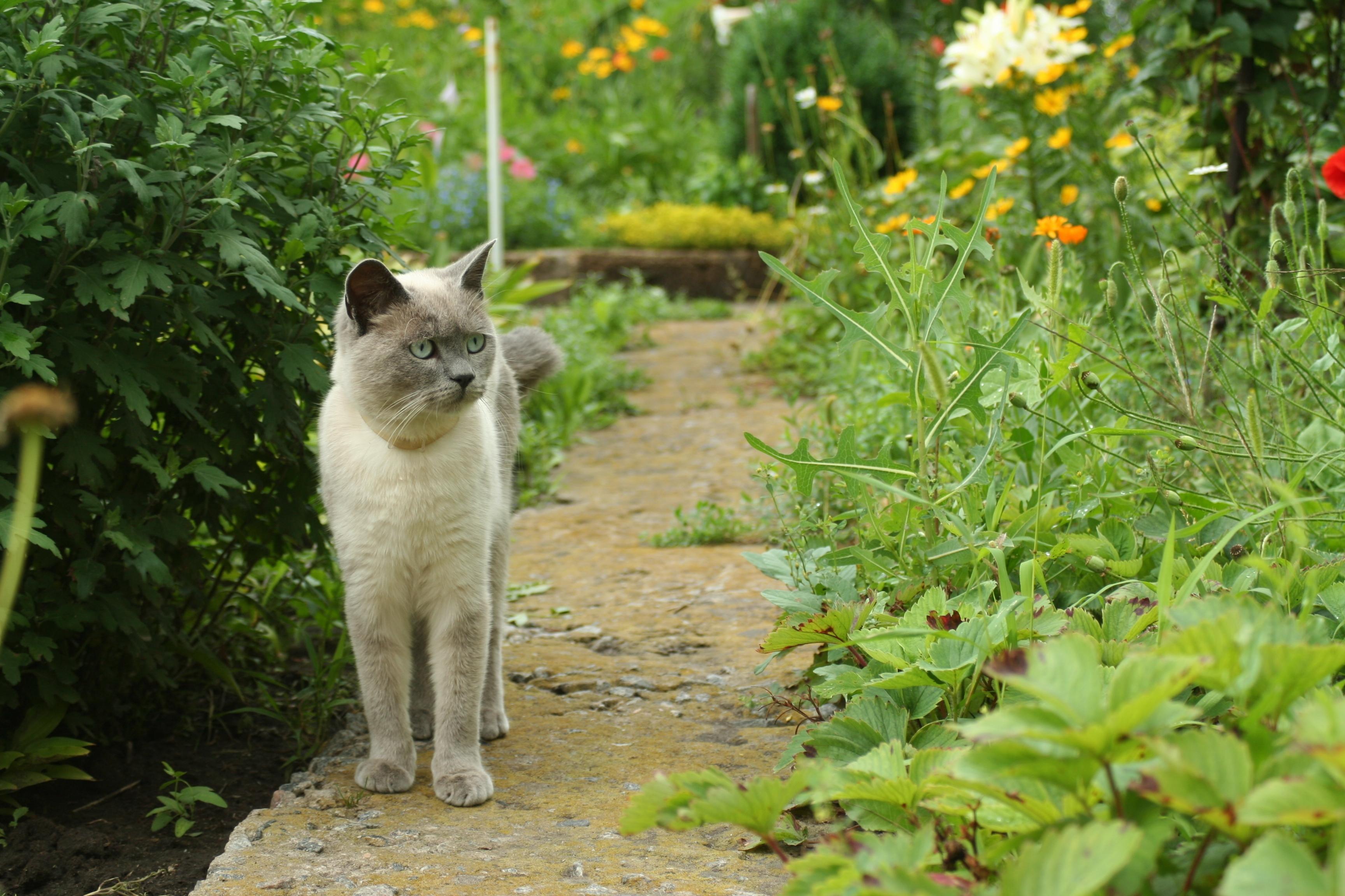 teken in de tuin