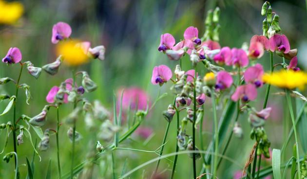 Bijen en vlinders naar je tuin lokken