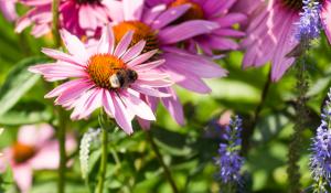 bijen en vlinders lokken