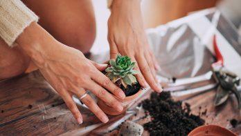 Tips verzorging vetplanten