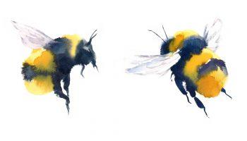 bijen zoeken