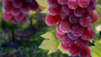 5x dit moet je weten over druiven