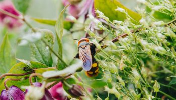 wespen op afstand houden