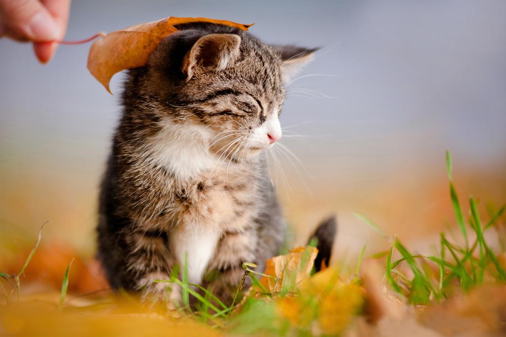 Uitzonderlijk Dieren die vrolijk worden van de herfst | 10 x leuke dierenplaatjes @AM23