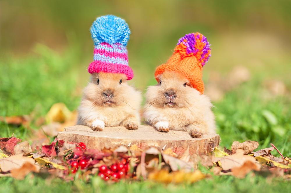 Fabulous Dieren die vrolijk worden van de herfst | 10 x leuke dierenplaatjes &MS03